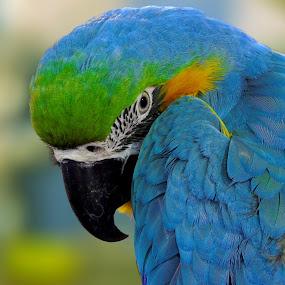 by Rajarshi Das - Animals Birds (  )