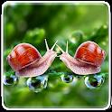 Perfect Nature Live Wallpaper icon