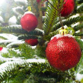 by Nicolaie Subotin - Public Holidays Christmas (  )