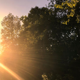 Sun  Sparks by Debra Summers - Nature Up Close Trees & Bushes ( sky, sun, trees )