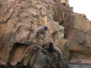 Photo: Good climbers!