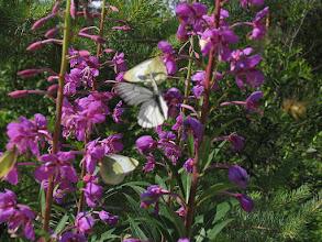 Photo: Цветы и бабочки