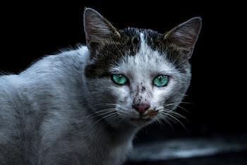 NYで路上アーティストをみつけたら。《「ミリキタニの猫」に考える社会的包摂》