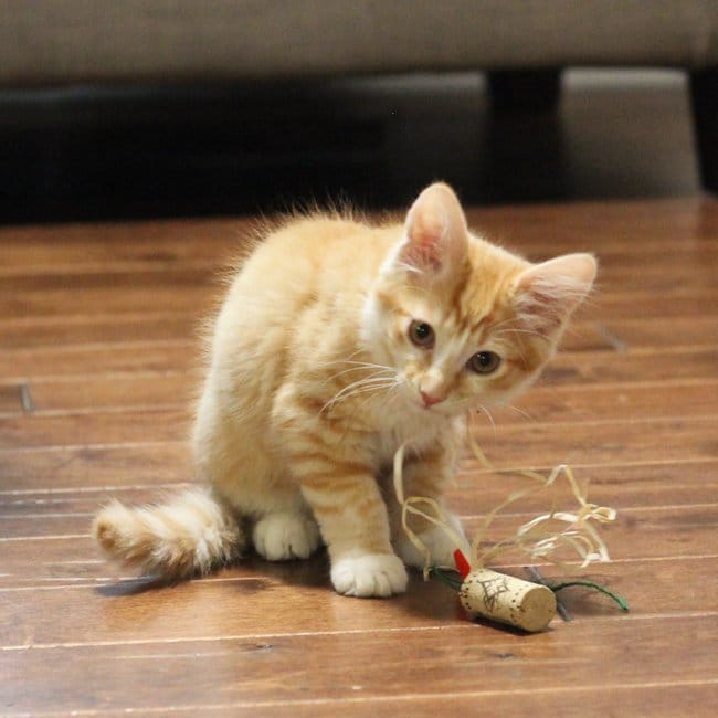 DIY Cat Toy Using Wine Corks