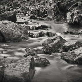 Smooth Flow by Todd Yoder - Black & White Landscapes ( water, b&w, foliage, creek, rocks, branches )