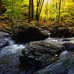 The Whispering Forest by Brandon Rechten - Landscapes Forests ( water, brandon rechten, nature, fall, forest, landscape )