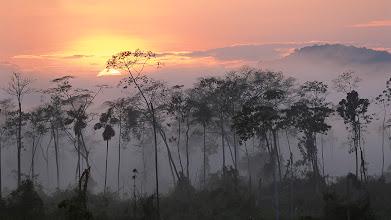 Photo: River edge at dawn, Lower Urubamba River, Amazon, Peru