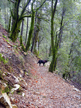 Photo: Chloe hiking up to the Papoose Pass