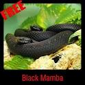 Black Mamba icon