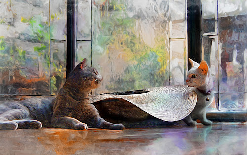 showdown over her mexican hat by John Kolenberg - Mixed Media All Mixed Media ( cats, impresionist, sombrero, photo painting, hat, pwc84, , #GARYFONGPETS, #SHOWUSYOURPETS )