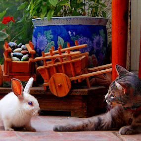pancho meets jessica rabbit by John Kolenberg - Animals - Cats Playing ( rabbit, playing, cat, feline, , #GARYFONGPETS, #SHOWUSYOURPETS )