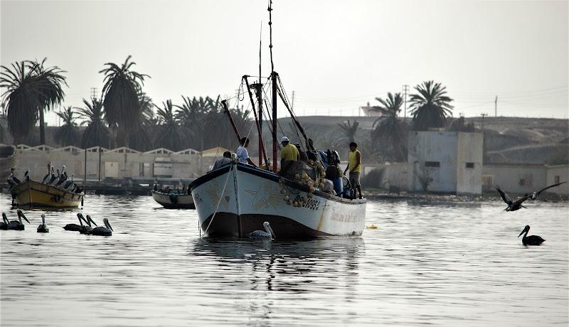 uomini e cormorani insieme per la pesca di luciano55