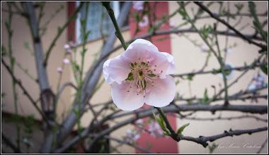 Photo: 2016.03.02 - de pe Calea Victoriei