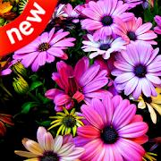 Flower 4k HD wallpapers