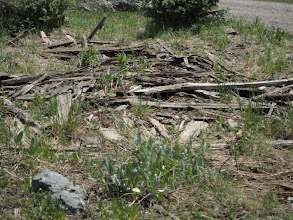 Photo: Wood deteriorates at different rates in different climates and species used can also impact preservation.
