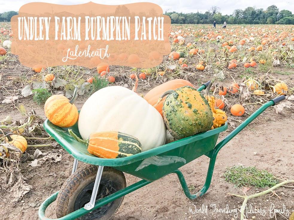 Undley Farm Pumpkin Patch - Lakenheath