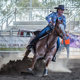 The Stop by Sarah Sullivan - Sports & Fitness Other Sports ( barrel racing, dust, dalby, sarah sullivan photography )