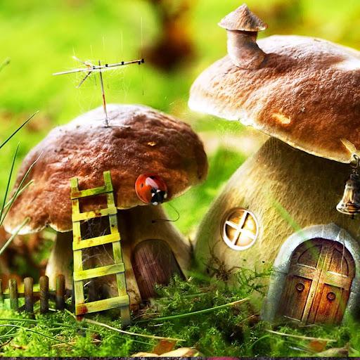 玩個人化App|蘑菇动态壁纸免費|APP試玩