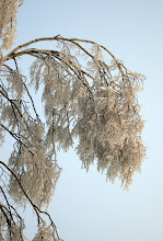 Photo: Ледяные гроздья...