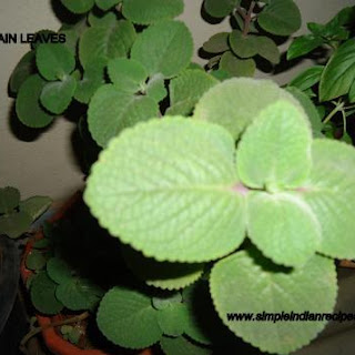 Ajwain Leaves Recipes