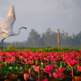 breakfast by Asrul CikguOwn - Animals Birds