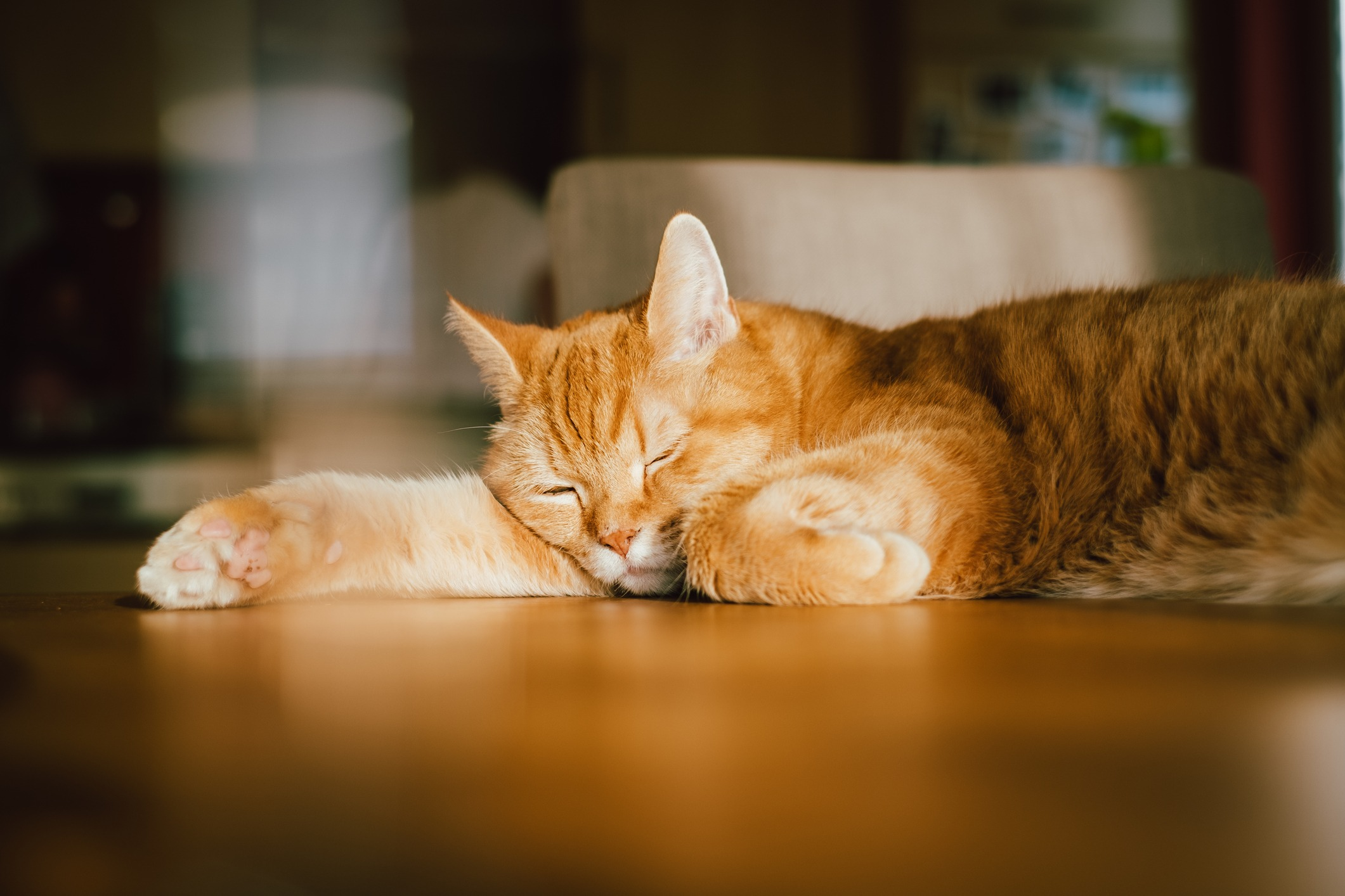 how long do cats sleep in a day