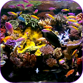 Aquarium Video Wallpaper