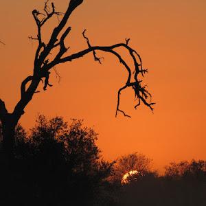 Kruger 2012 222.jpg