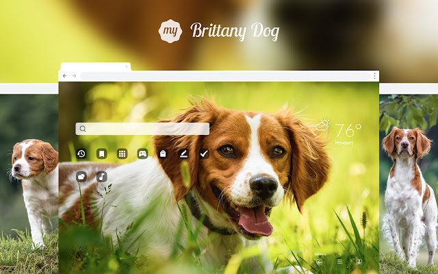 My Brittany Dog HD Wallpapers New Tab