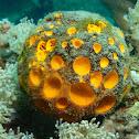 Orange/Yellow Ball Sea Sponge