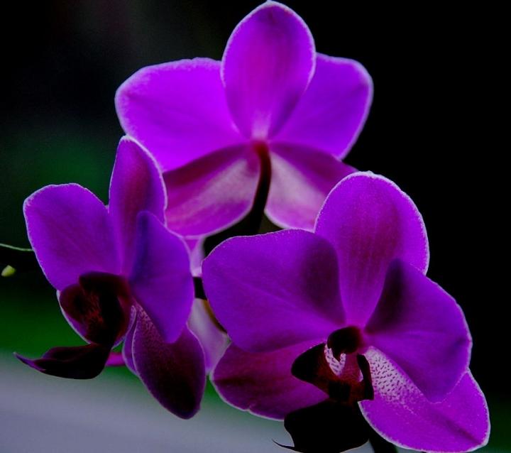 Orchidea di MARCOMARR