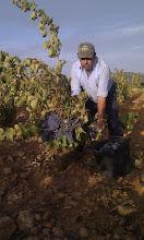 Photo: Viticultor sexi busca pareja en la zona de Calatayud... (Fotografía y titulo enviado por Javier Lopez Guillen)