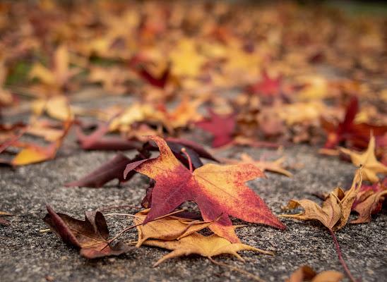 Foglie d'autunno di laura_bazzy_bazzan