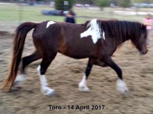 LP Painted Toro - 14 April 2017