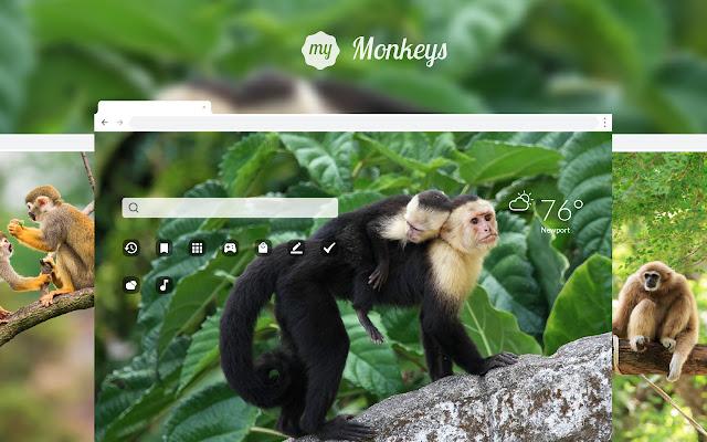 My Monkeys HD Wallpapers New Tab