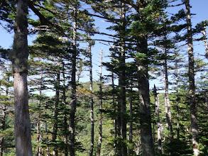 樹林の奥に檜尾岳方面