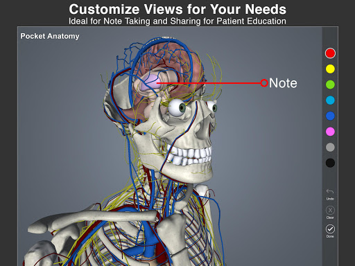 Pocket Anatomy Pro app for Android screenshot