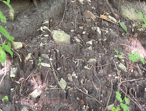 Photo: Only if you are interested in Archaeology.  Stones and debris on pedestals after Spring rain.