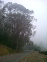Photo: The eucalypti across the road.