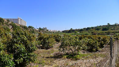 Photo: Fruit farm on river valley floor