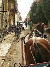 Photo: Horse-drawn cart ride through the streets of Saint-Louis