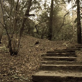 Old stairs.  by Mehdi Laraqui - Landscapes Forests ( old, stairs, nature, park, autumn, leaves., trees, forest )