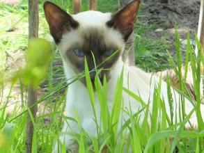 Photo: Tussen het hoge gras