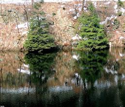 Photo: double  #treetuesday // +Tree Tuesdayby +Christina Lawrie& +Shannon S. Myers #fotoamateur // +Fotoamateurby +Britta Rogge+Scotti van Palm+Karsten Meyer+Markus Landsmann+Remo Primatesta #hqspnaturalother // +HQSP Natural Other #mirrormonday