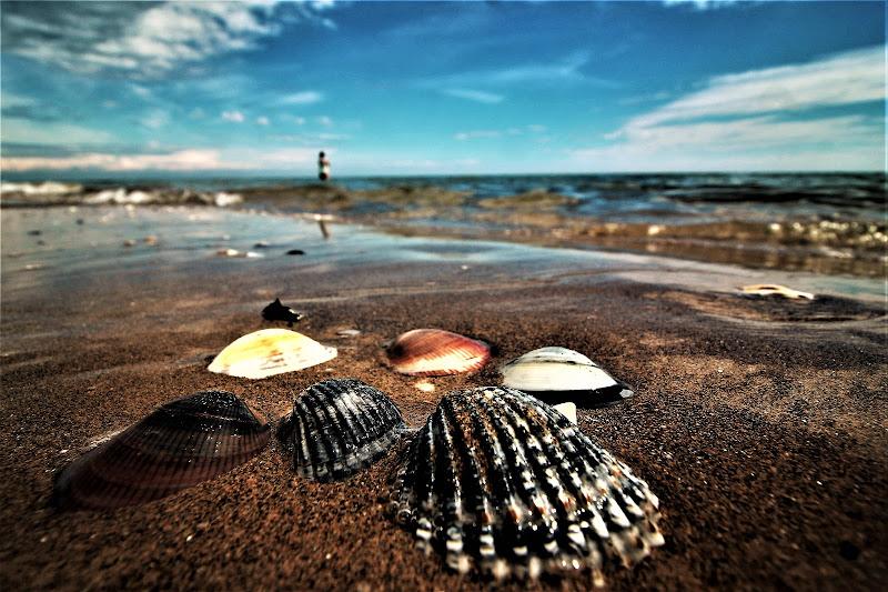 Shells di Vanja