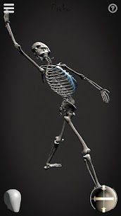 Skelly MOD (Cracked): Poseable Anatomy Model 6