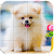 Tile Puzzle Pomeranian Dogs file APK for Gaming PC/PS3/PS4 Smart TV
