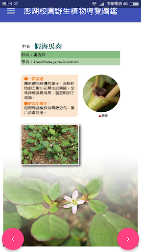 澎湖校園野生植物導覽圖鑑 app (apk) free download for Android/PC/Windows screenshot