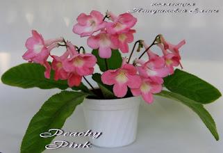 Photo: Peachy Pink