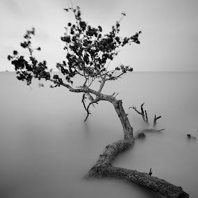 C 3 (Tranquility) by SyaFiq Sha'Rani - Landscapes Beaches ( tree, black and white, sunset, sea, beach, slow shutter )